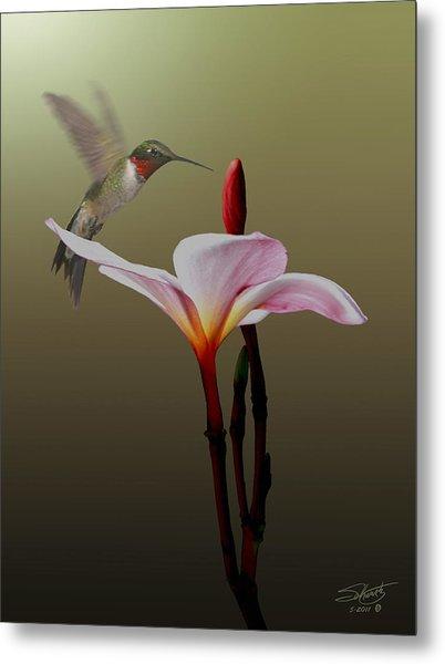 Frangipani Flower And Hummingbird Metal Print