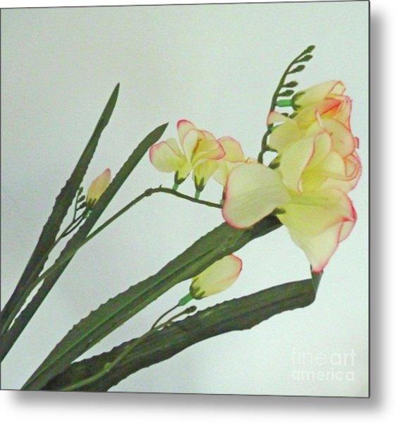 Freesia Blossoms In Pastel Colors Metal Print