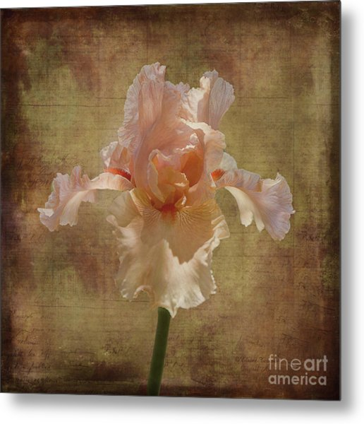 Frilly Iris Metal Print