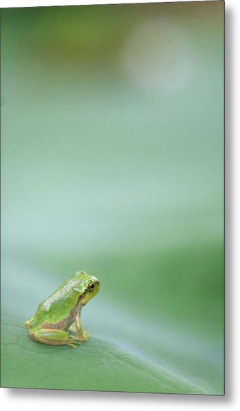Frog On Leaf Of Lotus Metal Print
