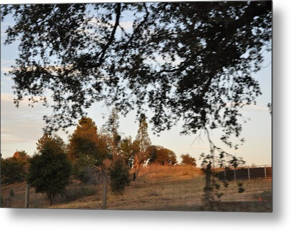 From Under The Trees Metal Print