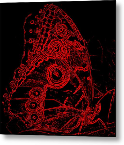 Fuego Fly Metal Print by Irma BACKELANT GALLERIES