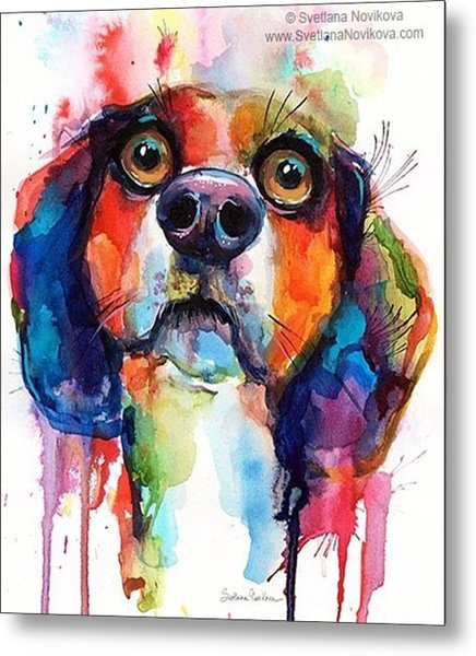 Funny Beagle Watercolor Portrait By Metal Print