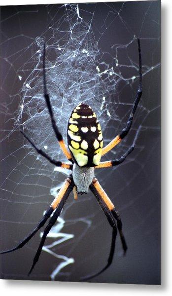 Garden Spider Metal Print by Bob Guthridge