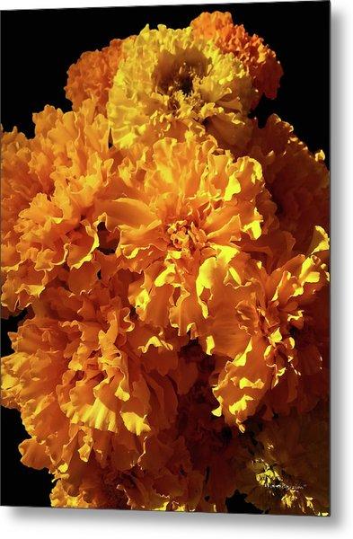 Giant Marigolds Metal Print