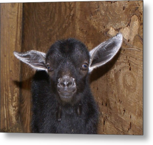 Gizmo Metal Print by Debbie May