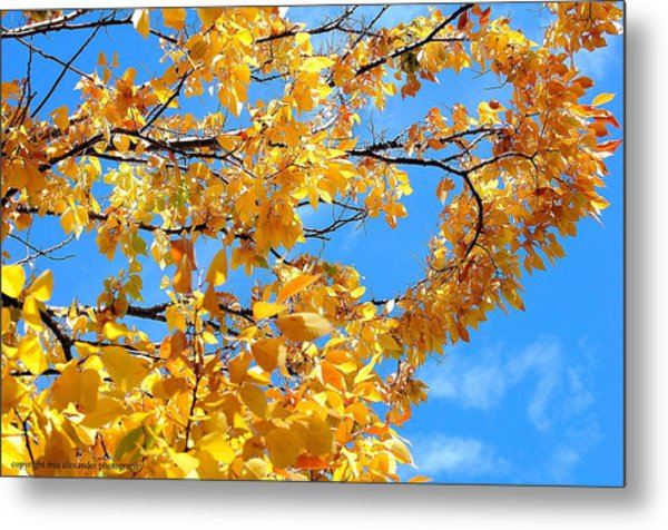 Golden Leaves Ll Metal Print
