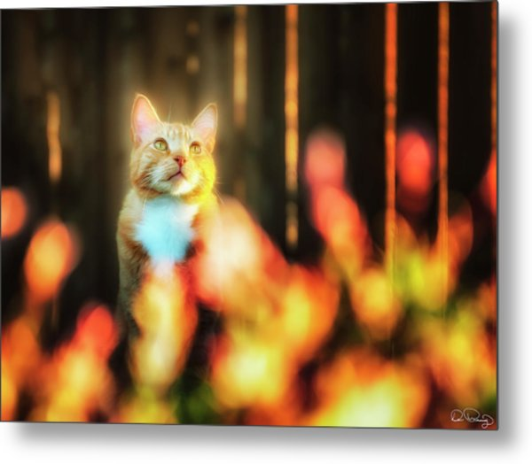 Golden Orange Tabby Metal Print