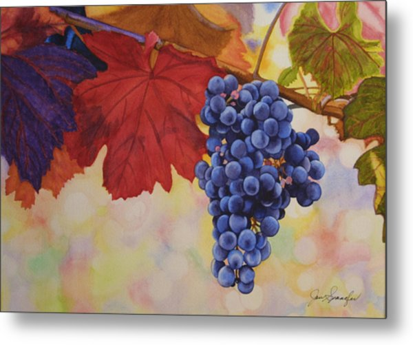 Grape Harvest Metal Print by Jan  Spangler