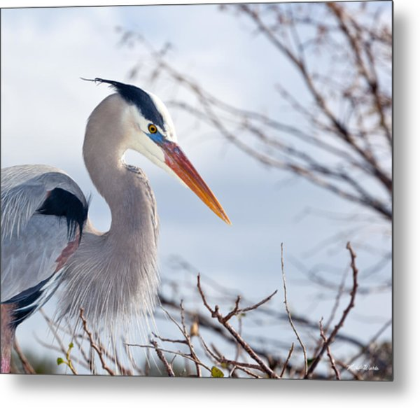 Great Blue Heron At Wakodahatchee Wetlands Metal Print