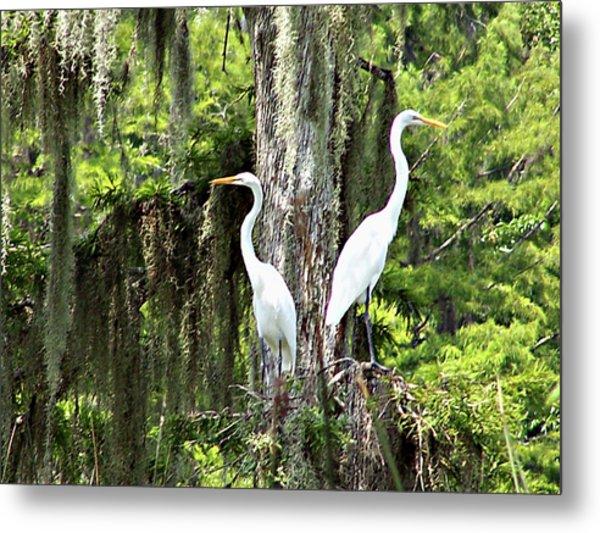 Great White Egrets Metal Print
