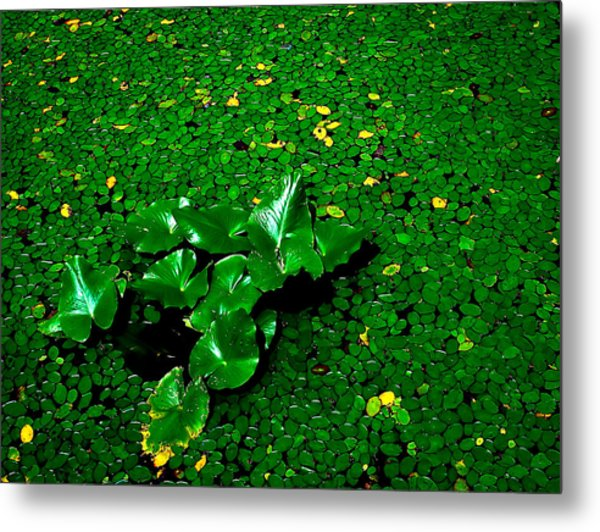 Green On Green Metal Print by Ron Plasencia