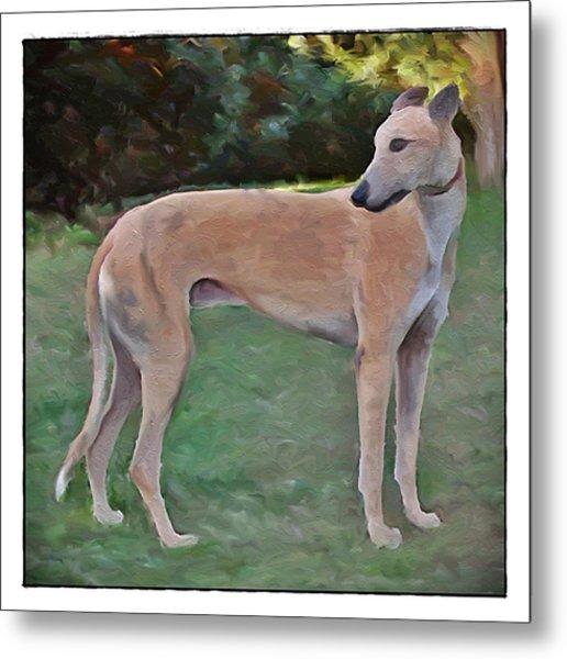 Greyhound Standing Rendered 103 Metal Print by Terry Mulligan