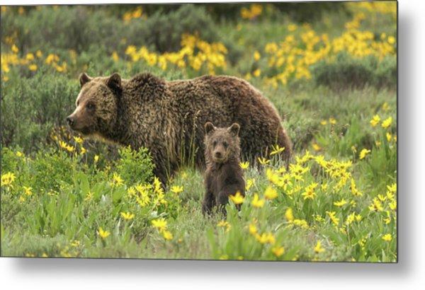 Grizzlies In The Wildflowers Metal Print