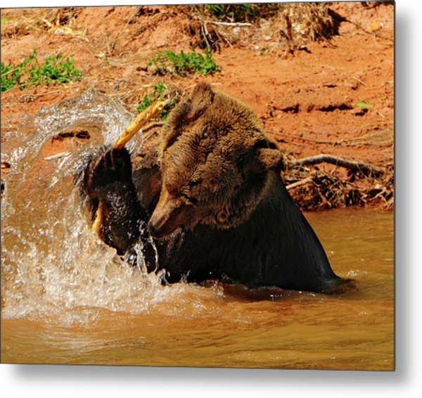 Grizzly At Play Metal Print by Dennis Hammer
