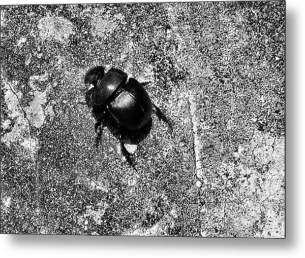 Harsh Life Black White Life Is Dung Beetle Card Metal Print by Kathy Daxon