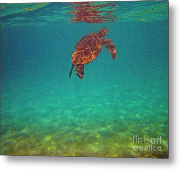 Hawaiian Sea Turtle - Floating Metal Print