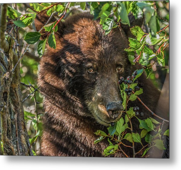 He Was Hiding In A Tree Metal Print