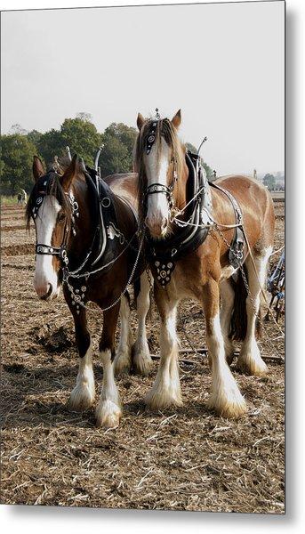 Heavy Horses Metal Print by Gerry Walden