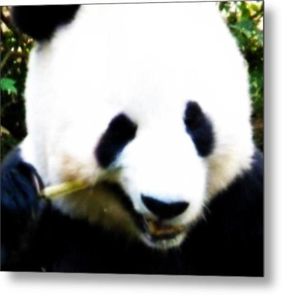 Hello Panda Metal Print