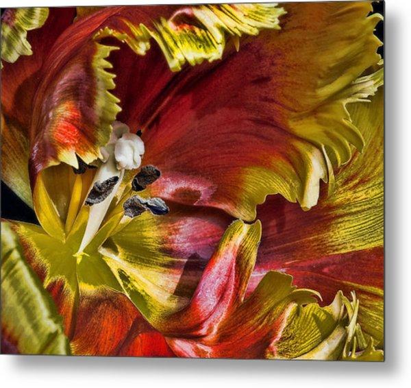 Hibiscus Spice Metal Print