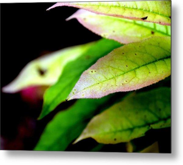Hickory Leaf Metal Print