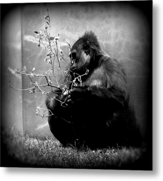 Hiding Gorilla Metal Print by Emily Kelley