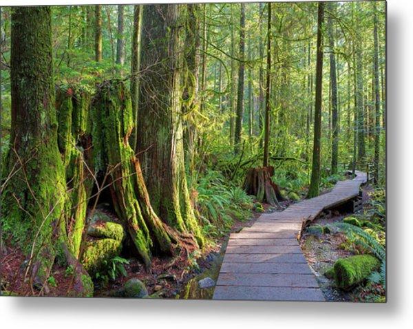 Hiking Trail Through Forest In Lynn Canyon Park Metal Print