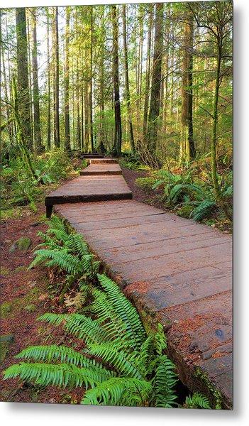Hiking Trail Wood Walkway In Lynn Canyon Park Metal Print