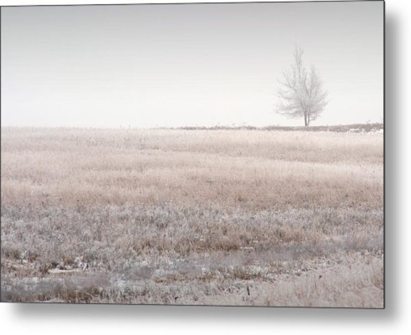 Hoarfrost Pasture Metal Print by Fred Lassmann