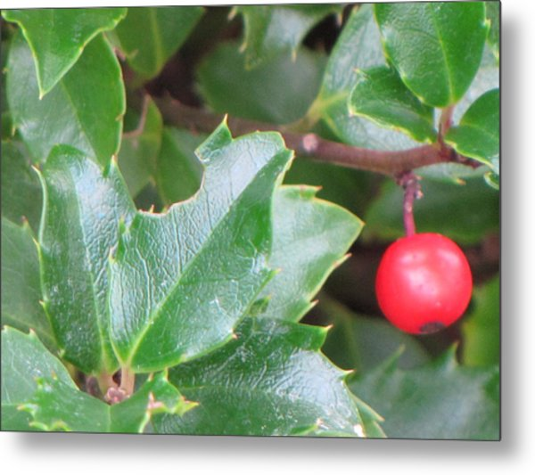 Holly Berry Metal Print by Sylvia Wanty