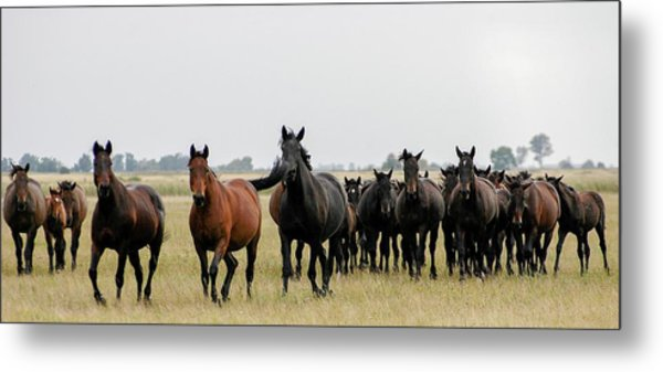 Horse Herd On The Hungarian Puszta Metal Print