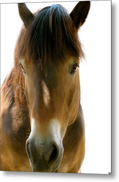 Horse Of Course Metal Print