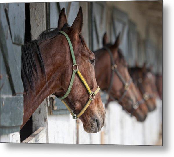 Horses For Sale Metal Print