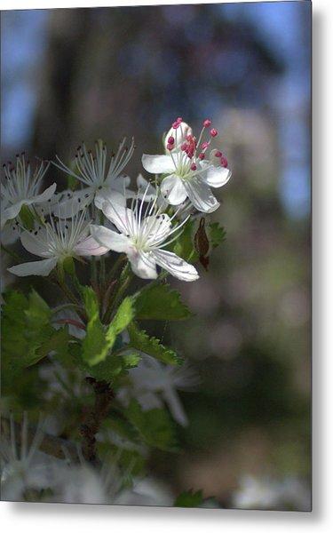Houston Arboretum Flowers Metal Print