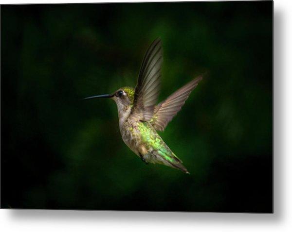 Hummingbird B Metal Print