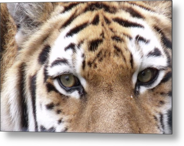 Hunters Eyes Metal Print