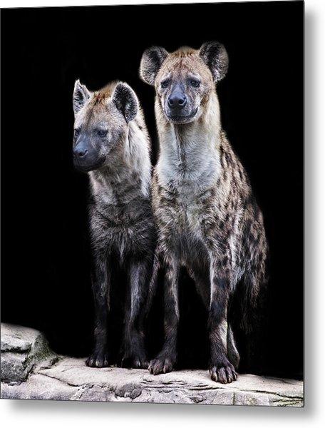 Hyena Lookout Metal Print