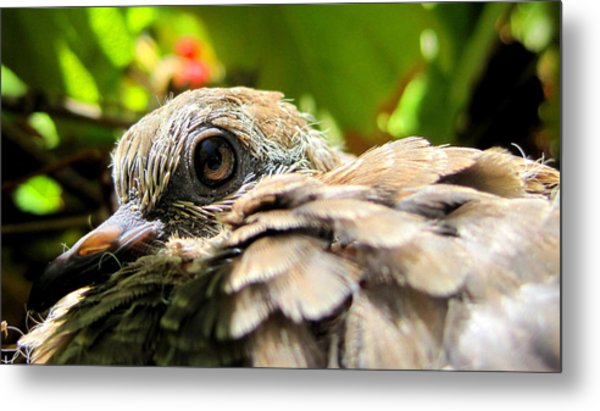 In The Nest Metal Print by Catherine Natalia  Roche