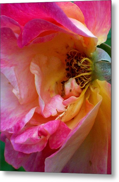 Inside Out Metal Print by Robin Jacobs