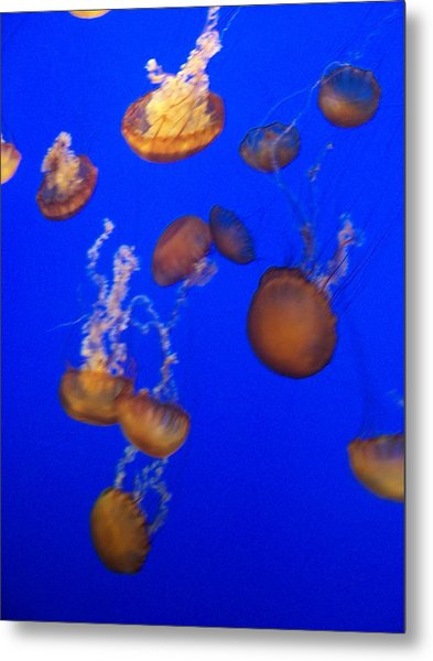 Jelly Fish 2 Metal Print by Dawn Marie Black