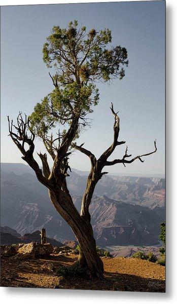 Juniper Tree At Grand Canyon II Metal Print