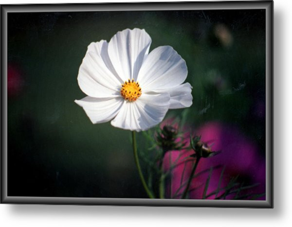 Just A Cosmos Metal Print by Russ Mullen