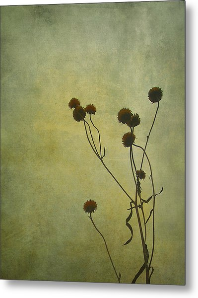 Just Weeds . . . Metal Print