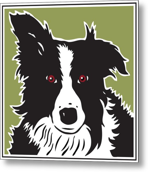 Kenai Border Collie Metal Print