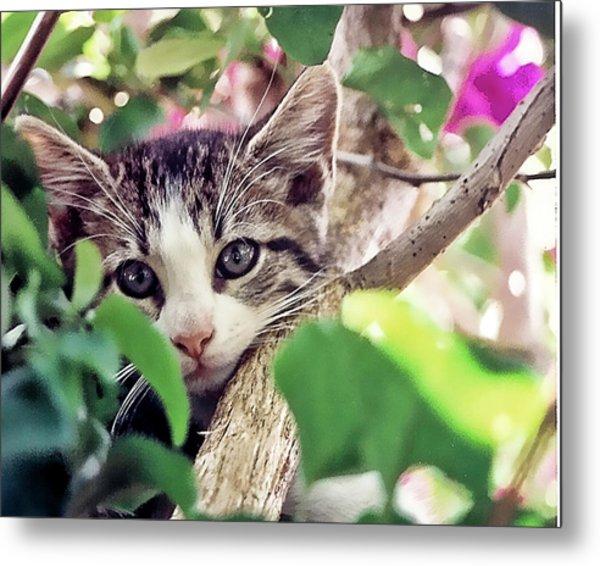 Kitten Hiding Out Metal Print by Francesco Roncone