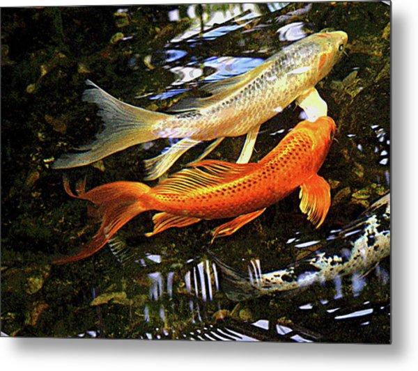 Koi Fish Swim In Synch Metal Print