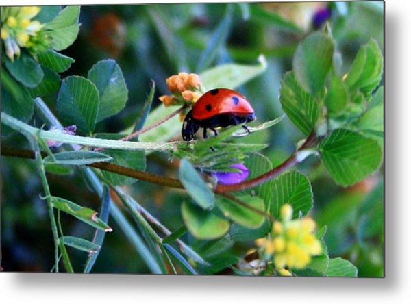 Ladybug Haven Metal Print