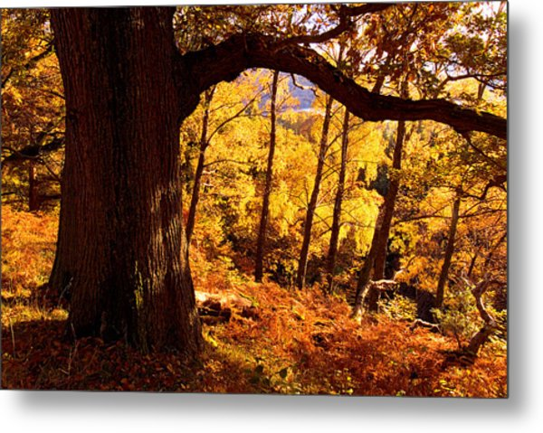 Lake District - Fall Colors Near Aira Force Metal Print by Dave Lawrance