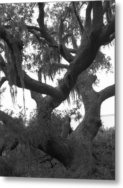 Lands End Talking Tree Metal Print